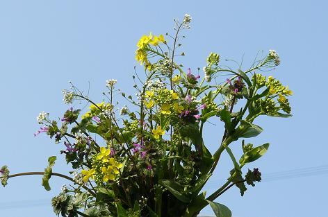 雑草の花束♪