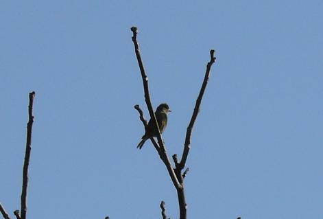 何という鳥?