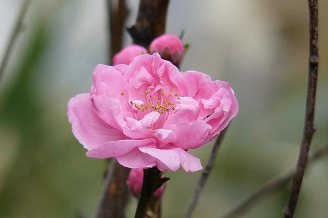 照手姫の花♪