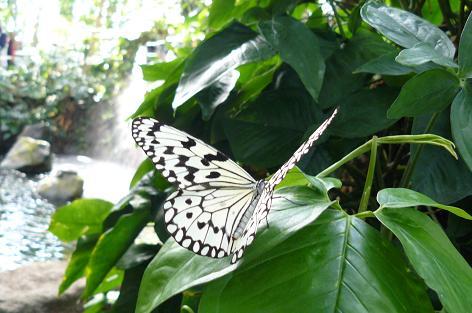 蝶があちこちに♪