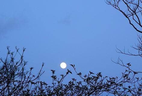 月が輝いてた♪