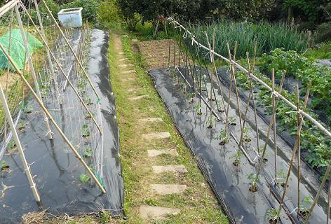 畑中段の夏野菜の植え付け完了