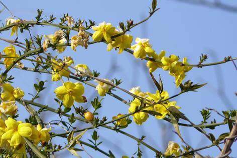 黄色と白の可愛い花が♪