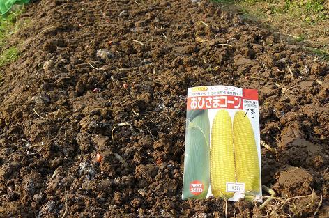 コーンの種蒔