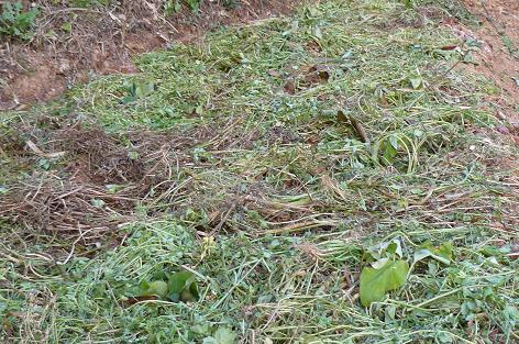 雑草マルチ
