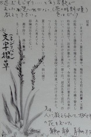 トマ爺の絵葉書