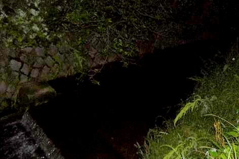 川の下流にホタルがいっぱい♪