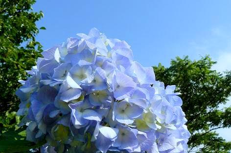 梅雨入り前の青空♪