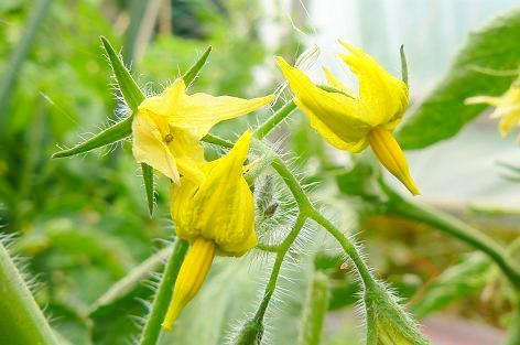 フルティカの花♪