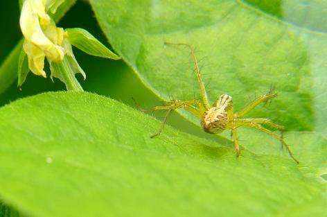 小さいクモ