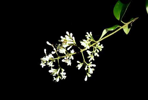 何の木の花?