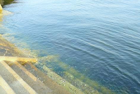 キレイになった洞海湾