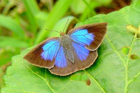 これも蝶か蛾だ(~_~;)