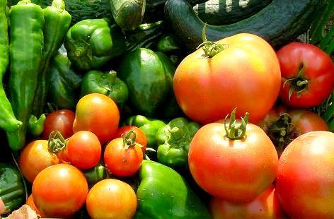 トマトが増えてきた♪