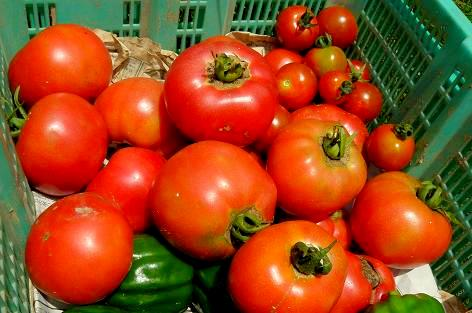 今日のトマト♪