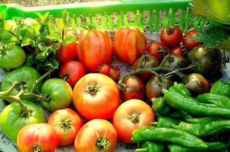 トマトたち♪