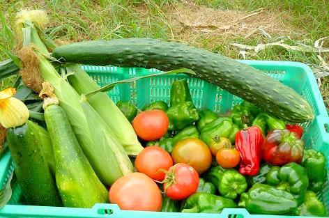 今日の収穫2