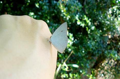 蝶がとまったぁ・・