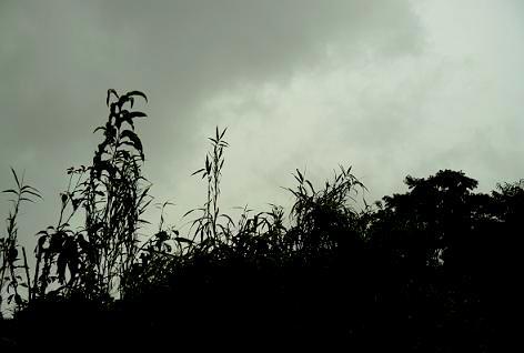 真っ黒い雲が♪