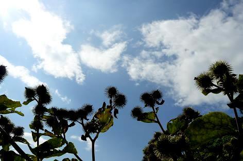 日曜日の空♪