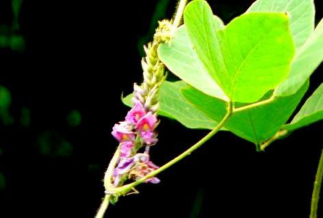 紫色の花♪