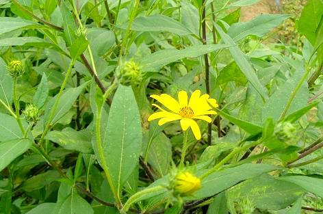 黄色くて小さい可愛い花♪
