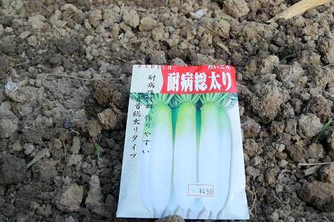 大根の種蒔♪