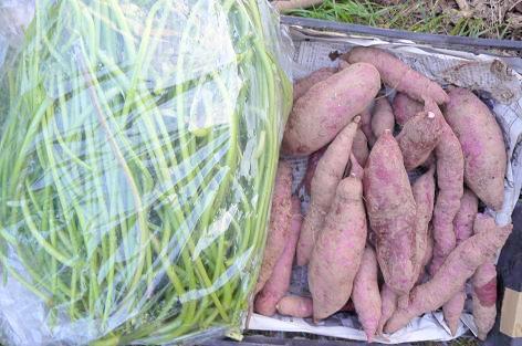 紫芋と芋蔓