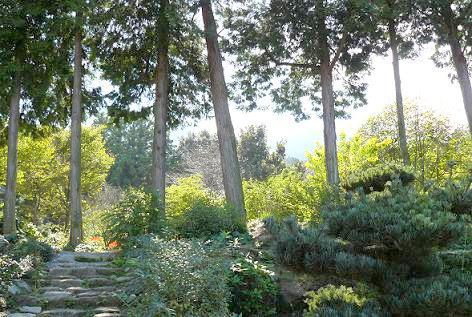 巨峰ワインへ向かう森の庭♪