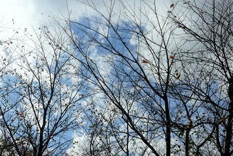 桜も葉が落ちた・・