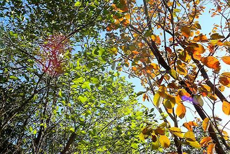 小屋前の柿と梅の木