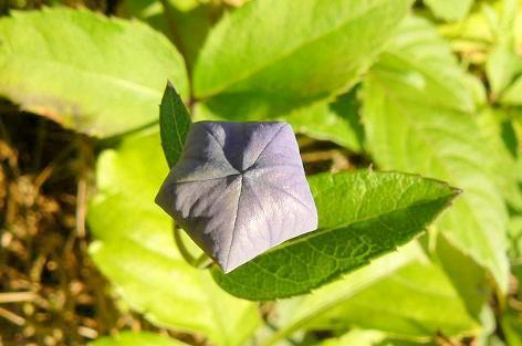 紫色の蕾♪