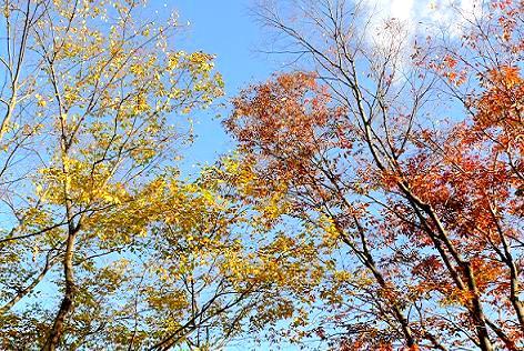 落ち葉がパラパラ・・・