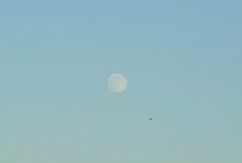 白いお月様とカラス♪