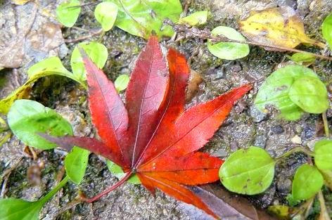 雨に濡れた落ち葉♪