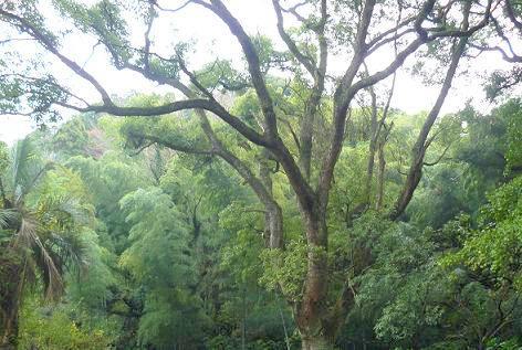 森と竹やぶ