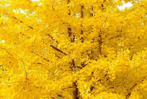 全部黄色に♪