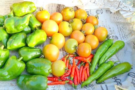 年越し夏野菜♪