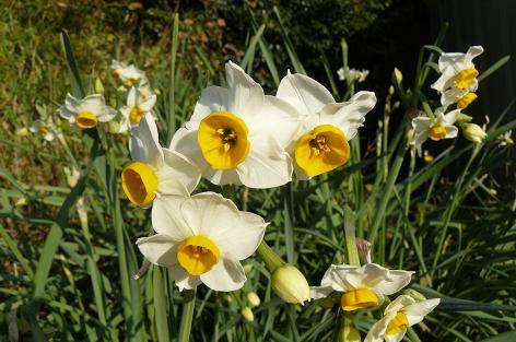 白は花盛り♪
