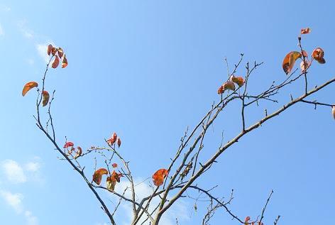 上の梨の木♪