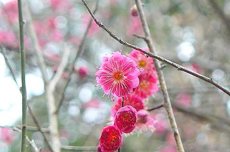 紅梅が咲いてた♪