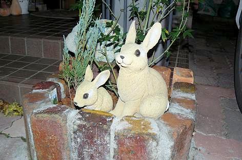 ウサギだ♪