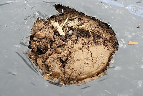 土をかける