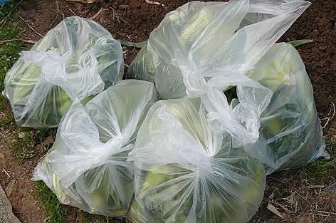 高菜を袋詰めに♪