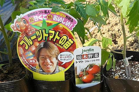 フルーツトマトの苗♪