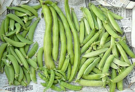 4種類の豆♪