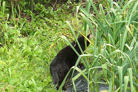 黒猫ちゃんだ♪