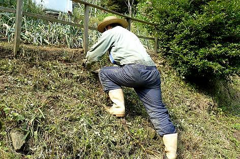 土手に植えた♪