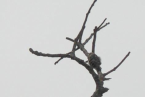 キツツキの木♪