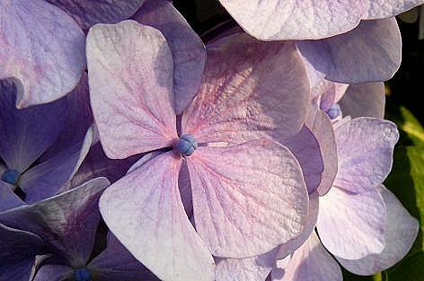 紫とピンク♪